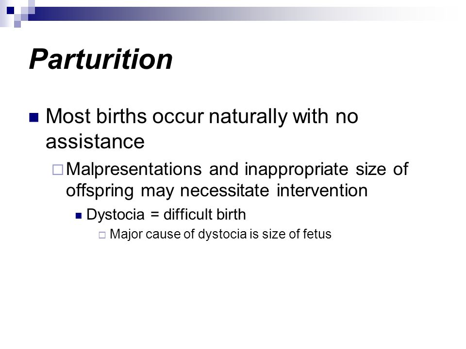 Parturition Most births occur naturally with no assistance