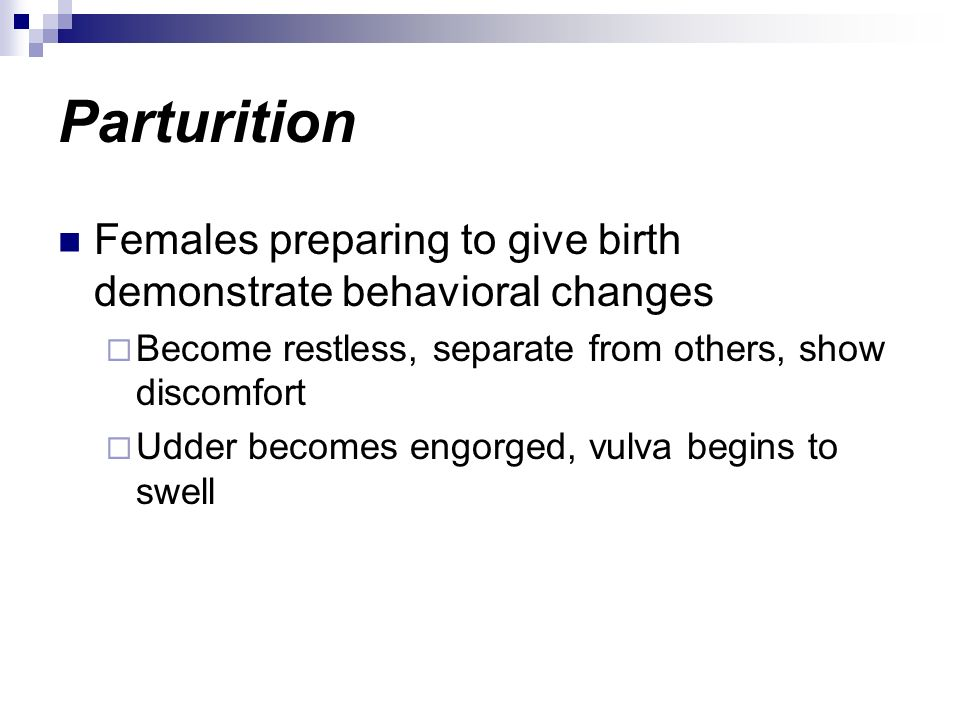 Parturition Females preparing to give birth demonstrate behavioral changes. Become restless, separate from others, show discomfort.