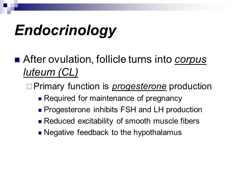 Endocrinology After ovulation, follicle turns into corpus luteum (CL)