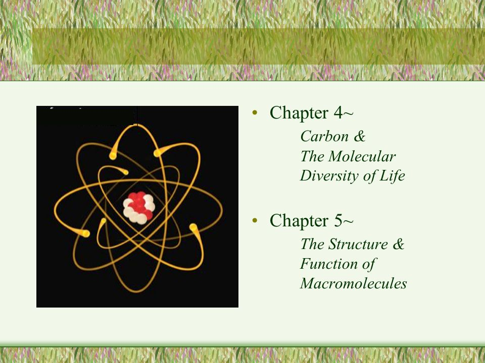 Chapter 4~ Carbon & The Molecular Diversity of Life