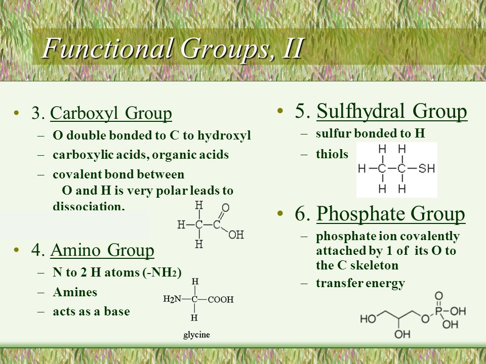 Functional Groups, II 5. Sulfhydral Group 6. Phosphate Group