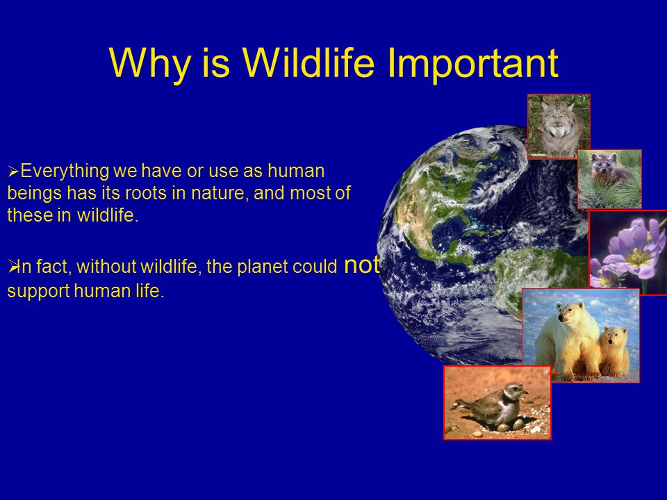 Why is Wildlife Important