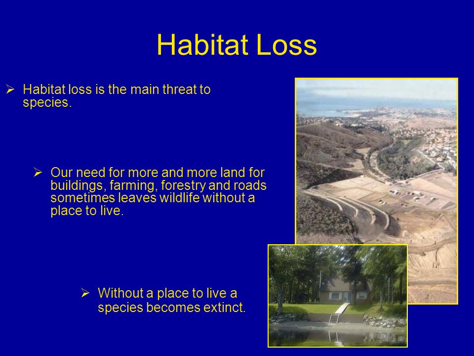 Habitat Loss Habitat loss is the main threat to species.
