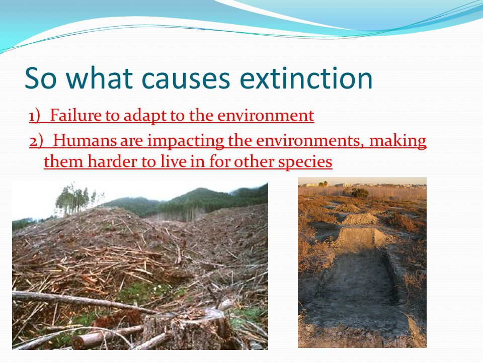 So what causes extinction