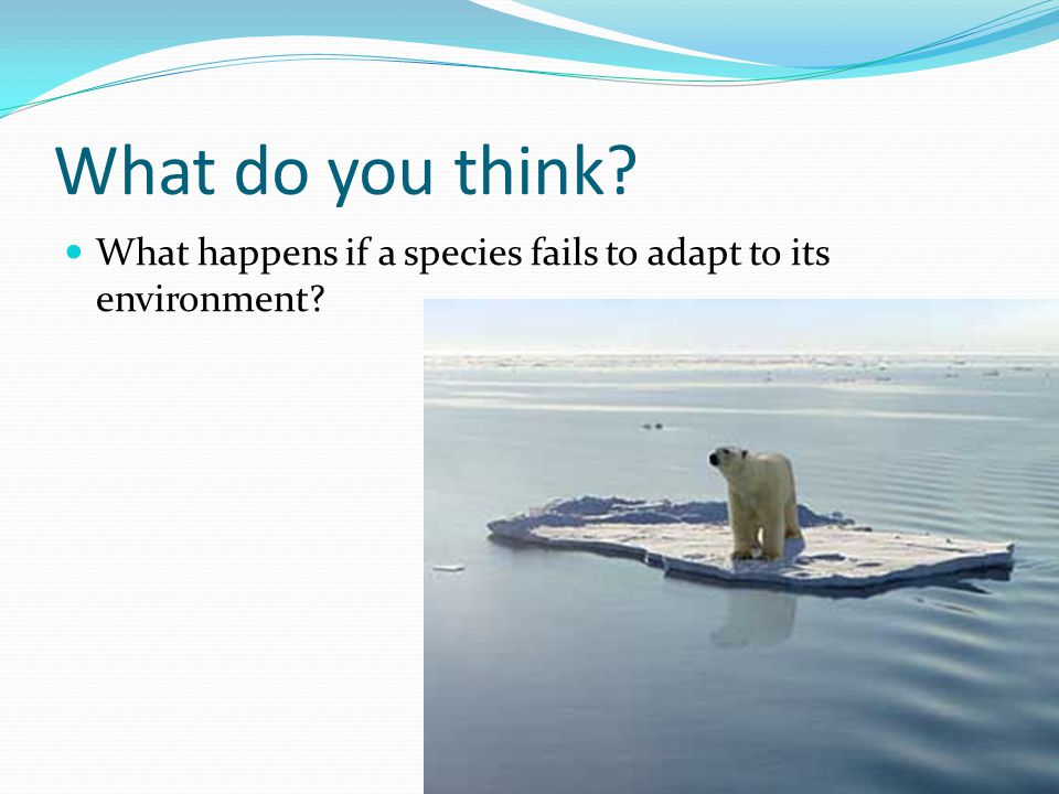 What do you think What happens if a species fails to adapt to its environment