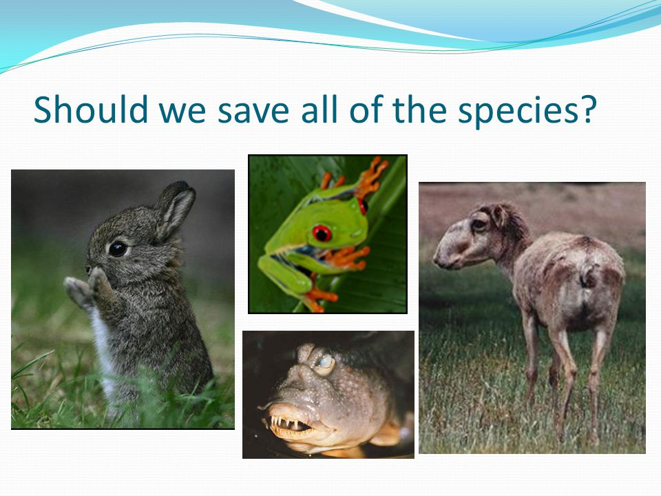 Should we save all of the species
