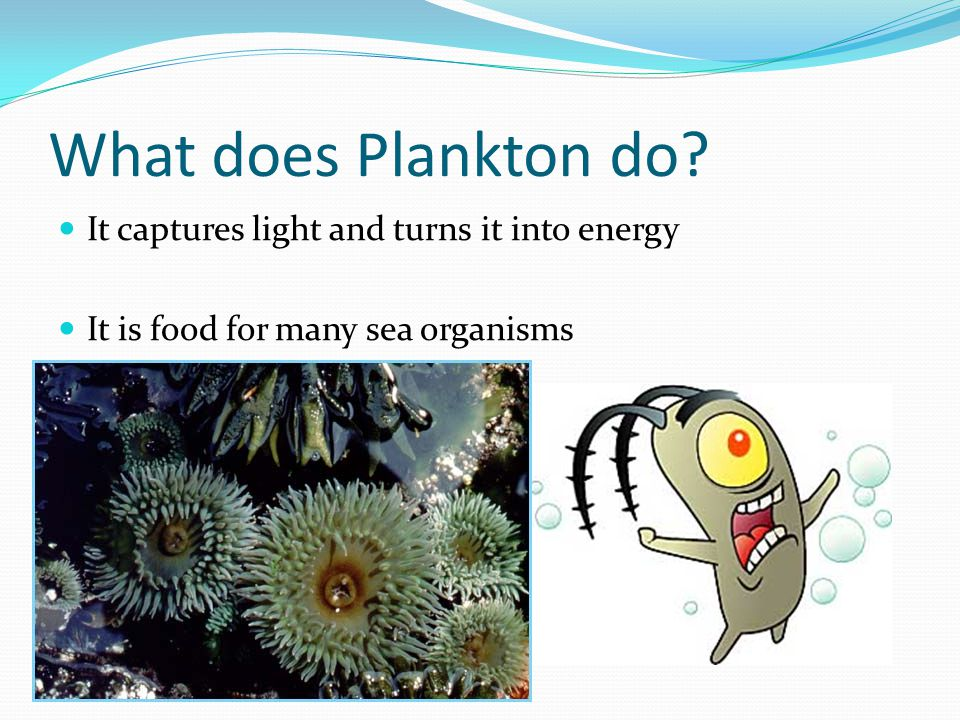 What does Plankton do It captures light and turns it into energy