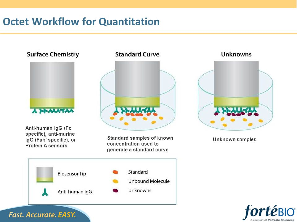 Octet Workflow for Quantitation