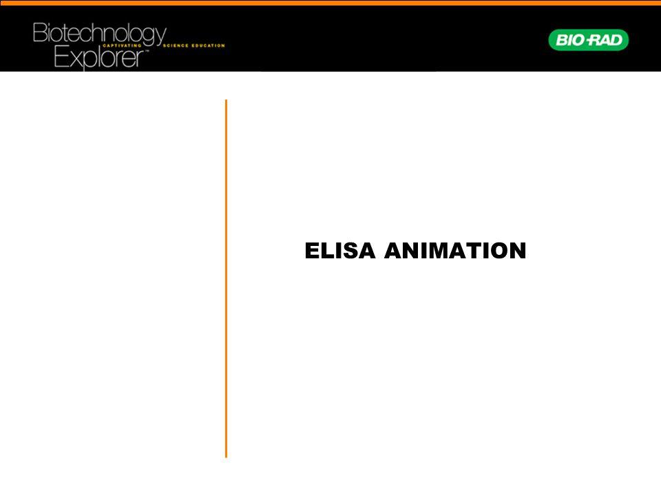 ELISA ANIMATION