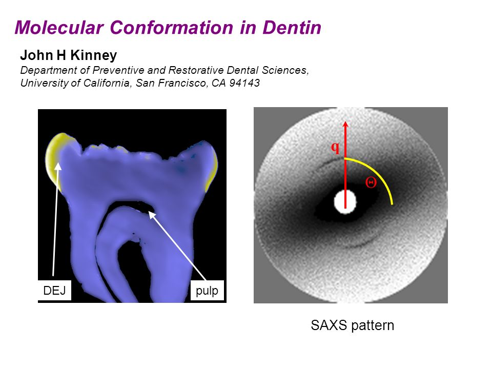 Molecular Conformation in Dentin