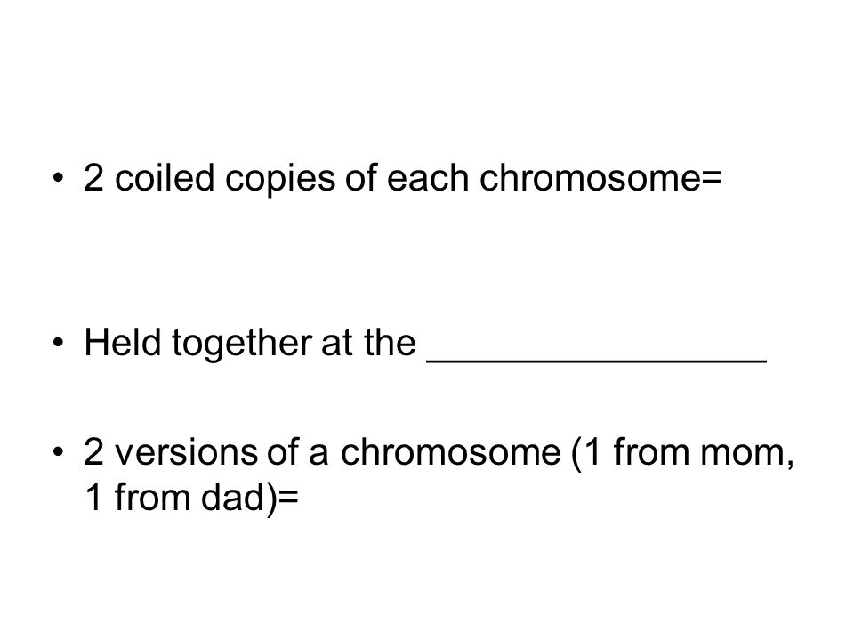 2 coiled copies of each chromosome=