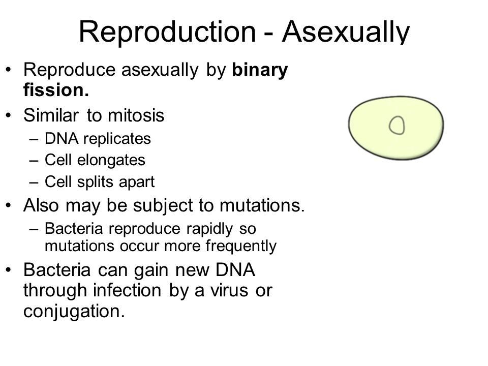 Reproduction - Asexually