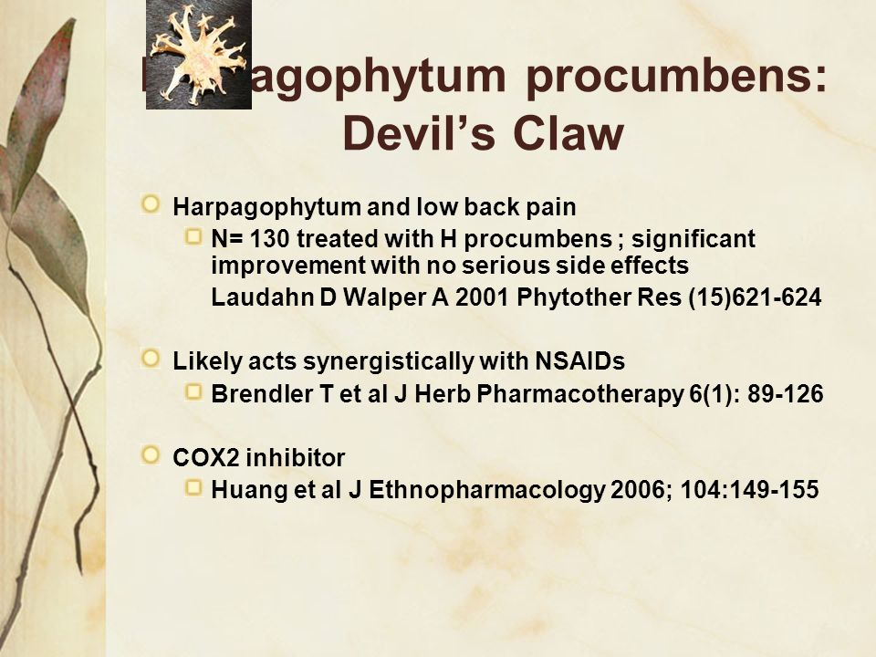 Harpagophytum procumbens: Devil's Claw