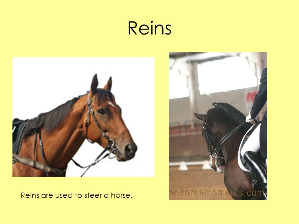 Reins Reins are used to steer a horse.