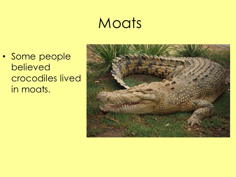 Moats Some people believed crocodiles lived in moats.