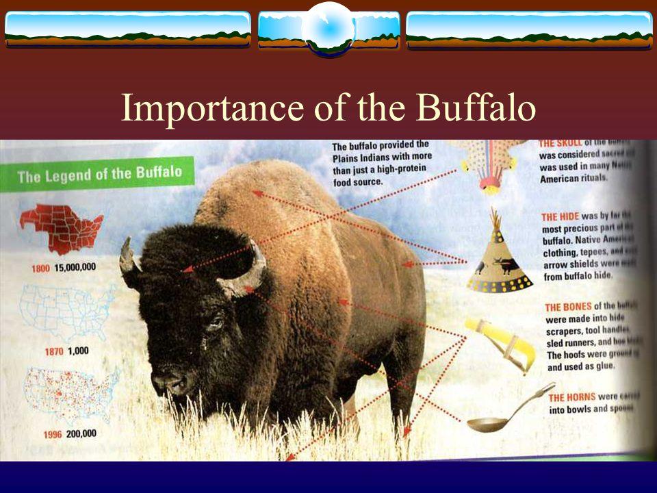 Importance of the Buffalo