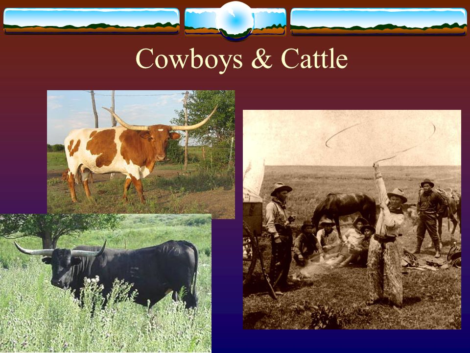 Cowboys & Cattle