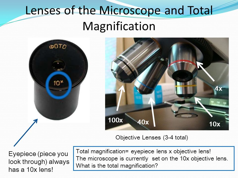 Lenses of the Microscope and Total Magnification