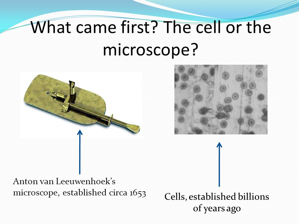 What came first The cell or the microscope