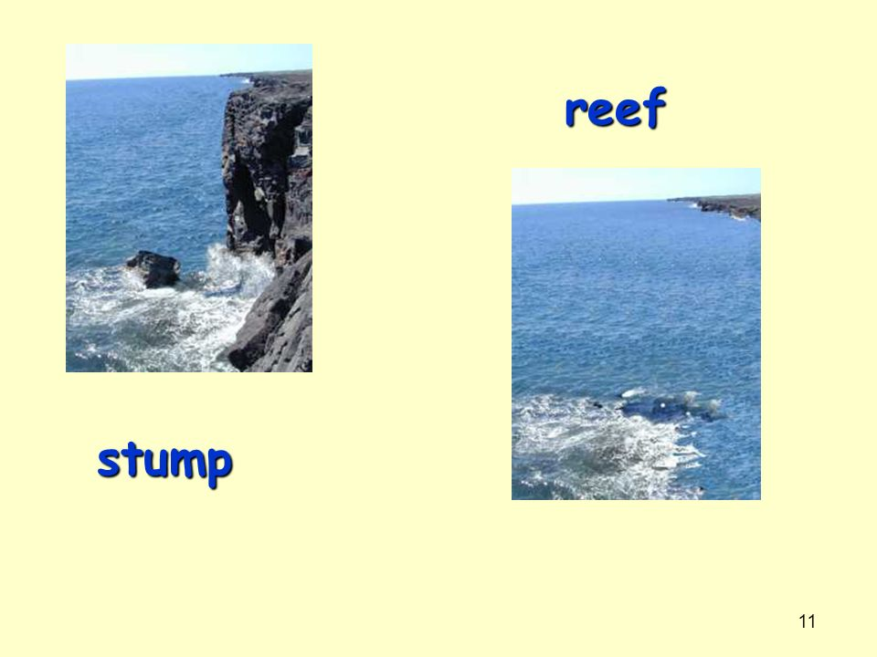 reef stump