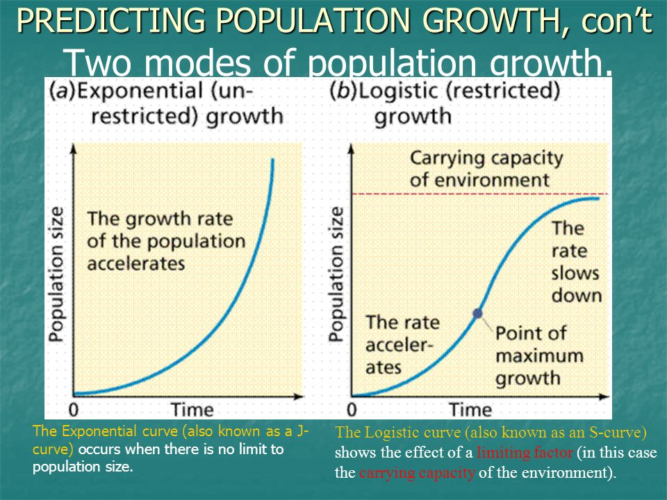 PREDICTING POPULATION GROWTH, con't Two modes of population growth.