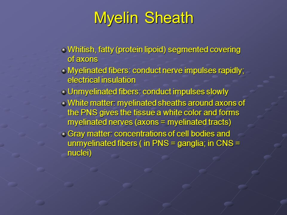 Myelin Sheath Whitish, fatty (protein lipoid) segmented covering of axons. Myelinated fibers: conduct nerve impulses rapidly; electrical insulation.