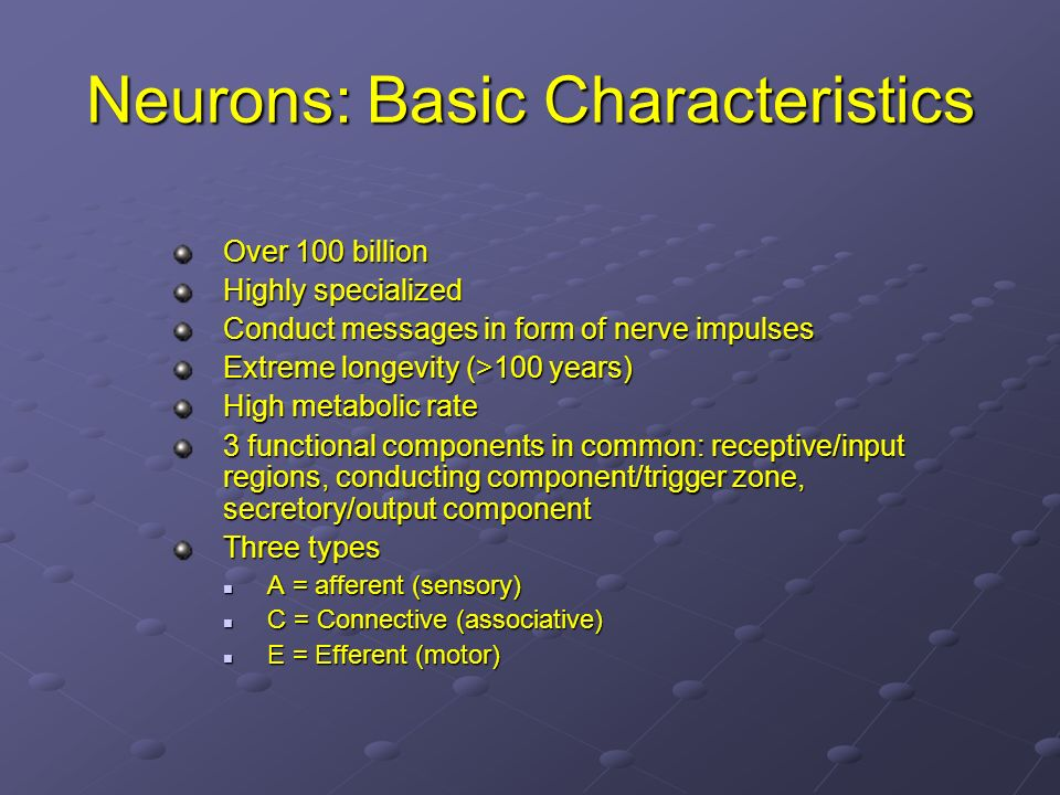 Neurons: Basic Characteristics