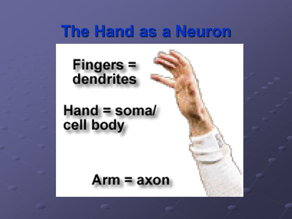 The Hand as a Neuron