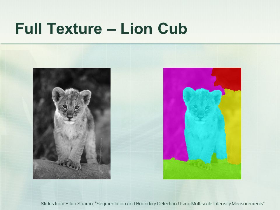 Full Texture – Lion Cub Slides from Eitan Sharon, Segmentation and Boundary Detection Using Multiscale Intensity Measurements .