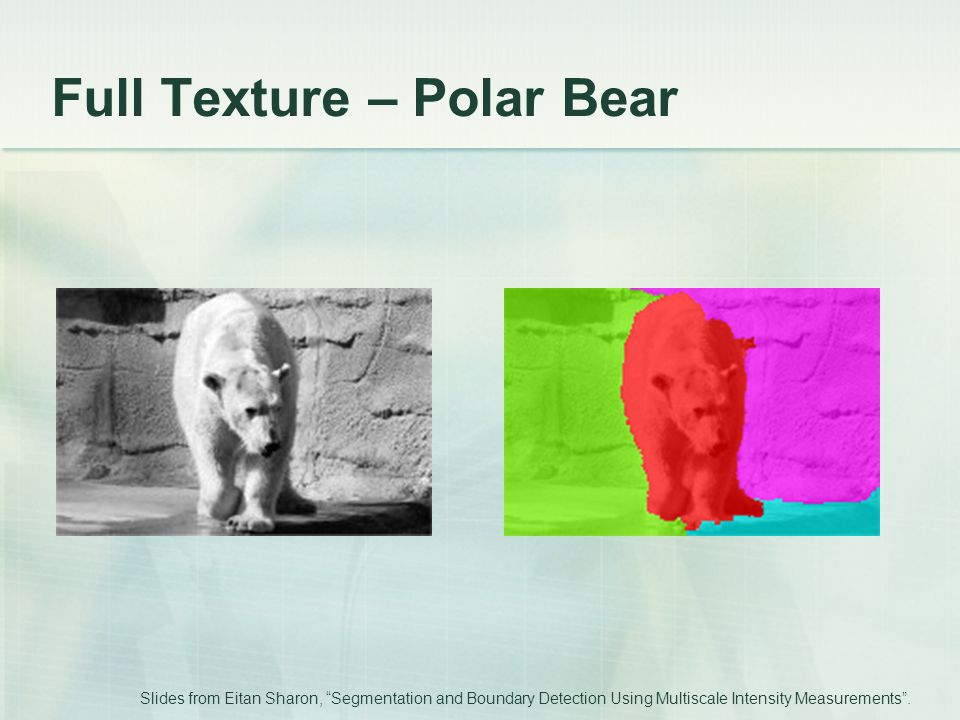 Full Texture – Polar Bear