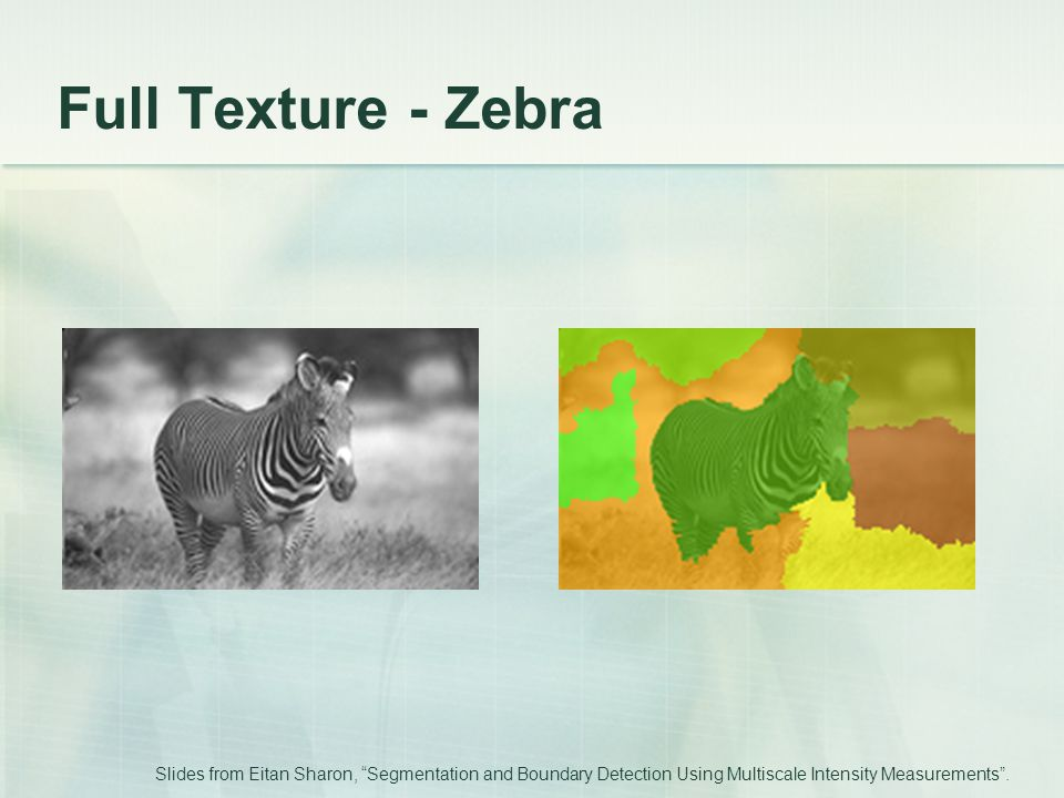 Full Texture - Zebra Slides from Eitan Sharon, Segmentation and Boundary Detection Using Multiscale Intensity Measurements .