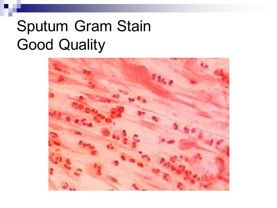 Sputum Gram Stain Good Quality