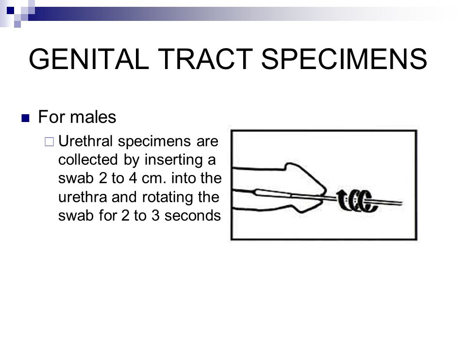 GENITAL TRACT SPECIMENS