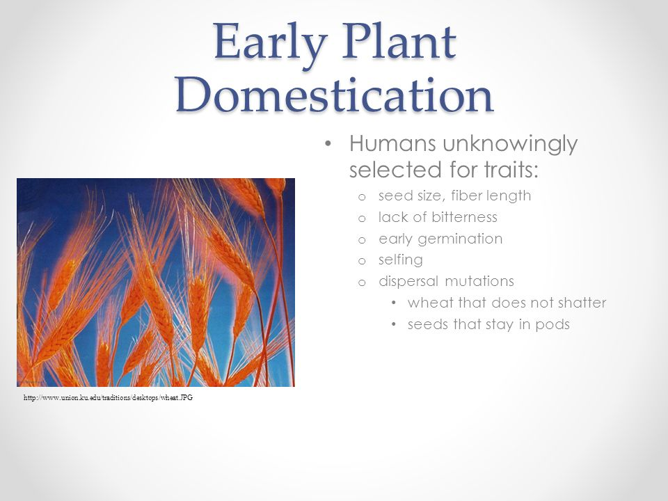 Early Plant Domestication