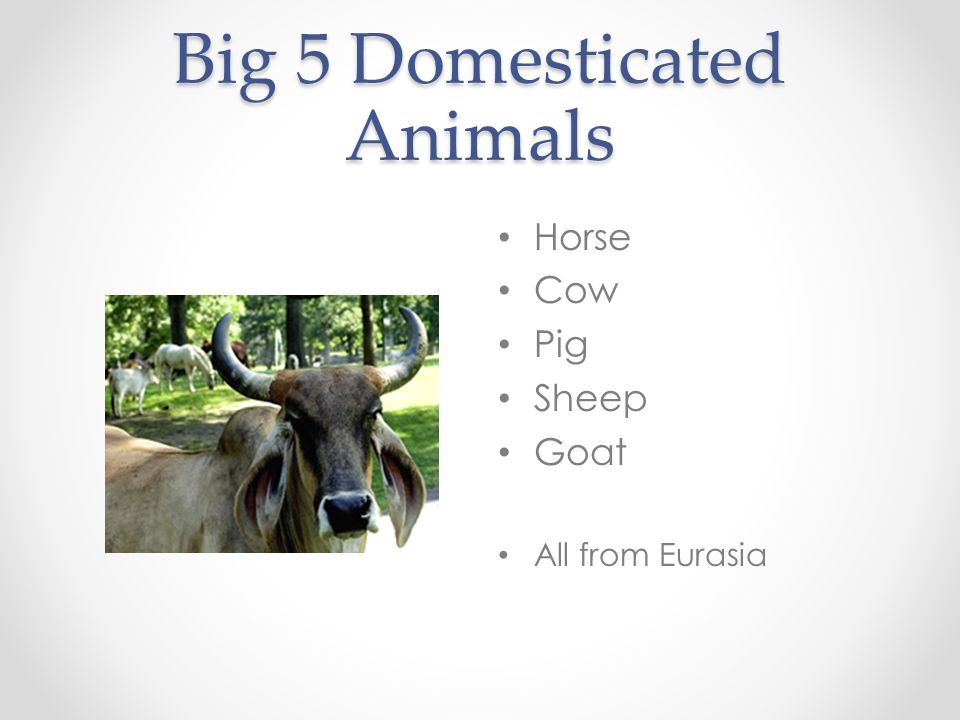Big 5 Domesticated Animals