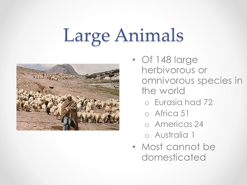 Large Animals Of 148 large herbivorous or omnivorous species in the world. Eurasia had 72. Africa 51.