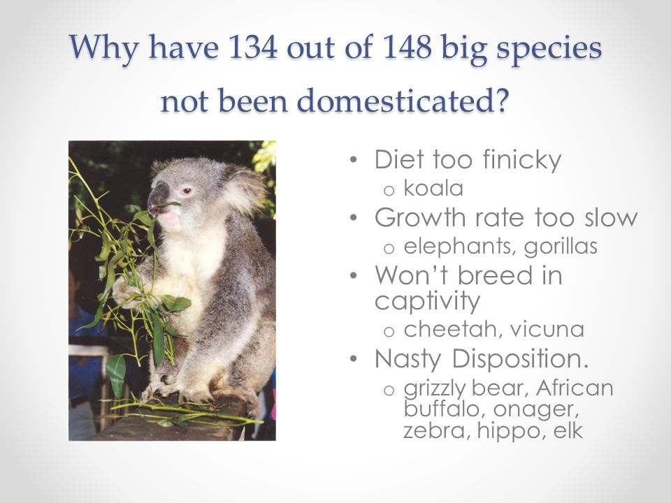 Why have 134 out of 148 big species not been domesticated