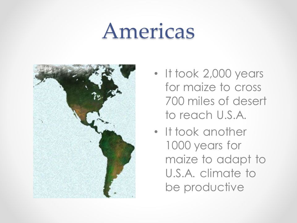 Americas It took 2,000 years for maize to cross 700 miles of desert to reach U.S.A.