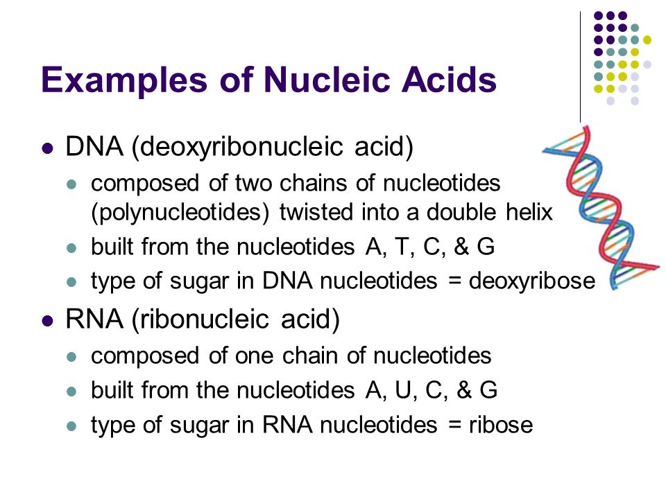 Examples of Nucleic Acids