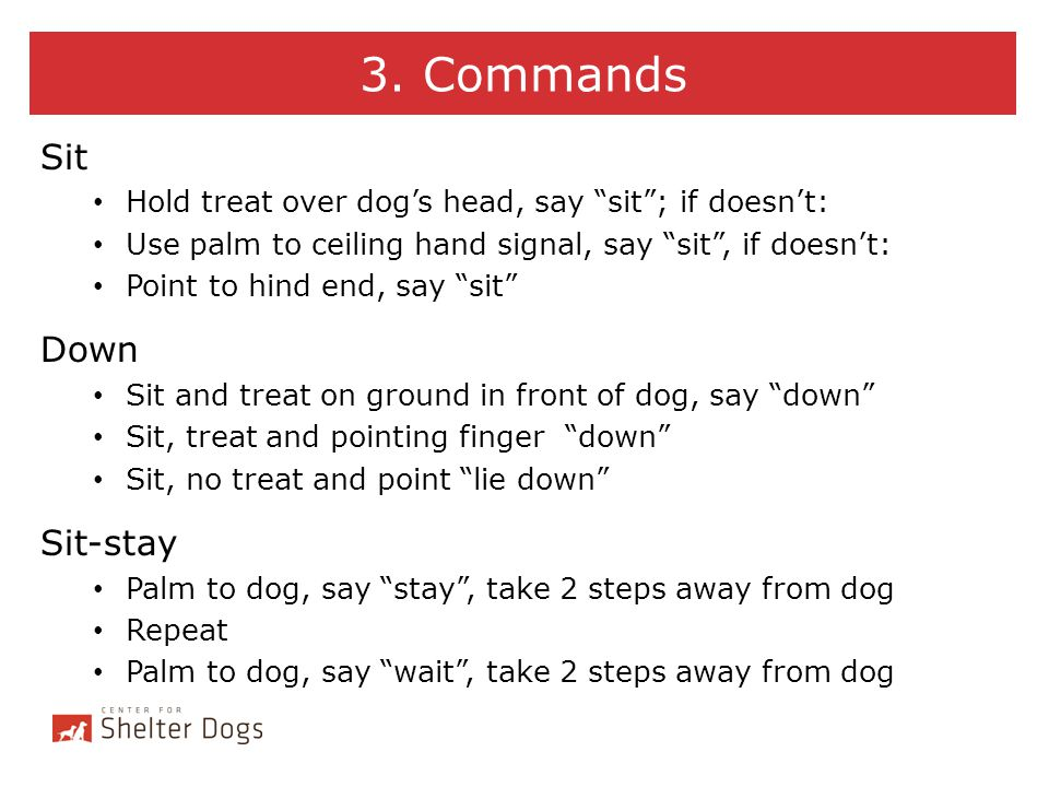 3. Commands Sit Down Sit-stay