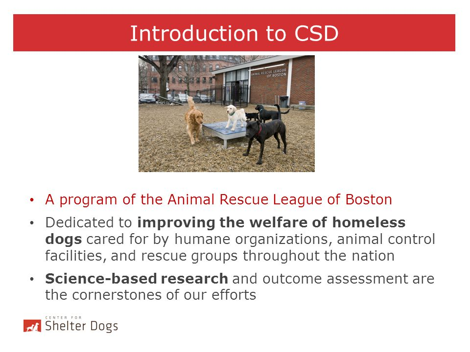 Introduction to CSD A program of the Animal Rescue League of Boston