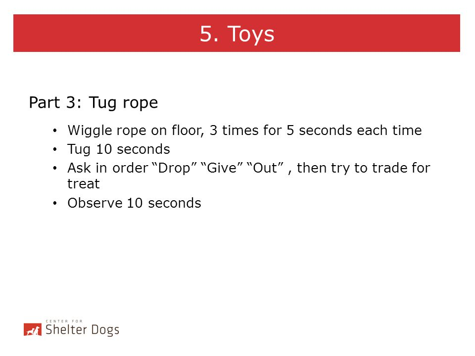 5. Toys Part 3: Tug rope. Wiggle rope on floor, 3 times for 5 seconds each time. Tug 10 seconds.