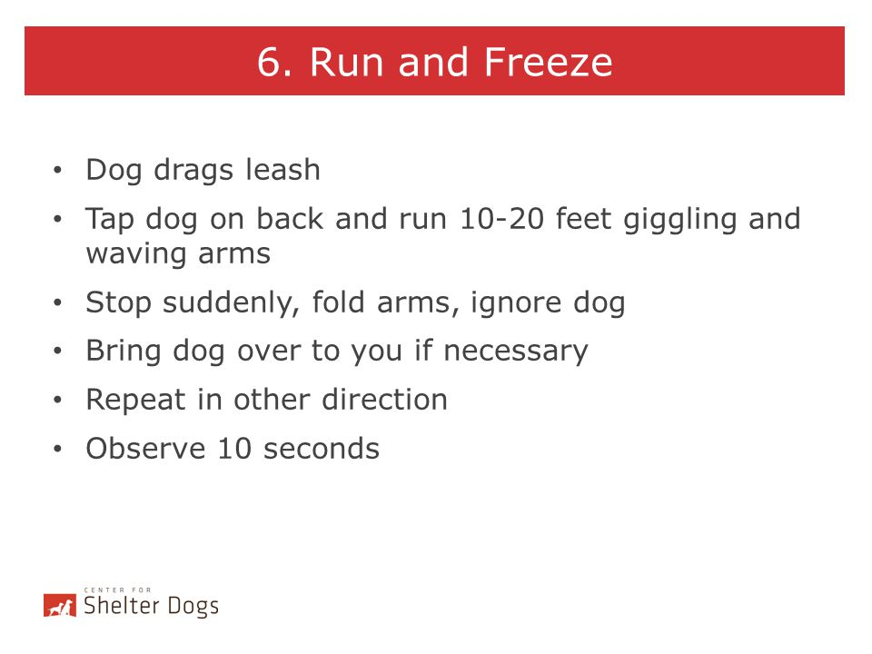 6. Run and Freeze Dog drags leash