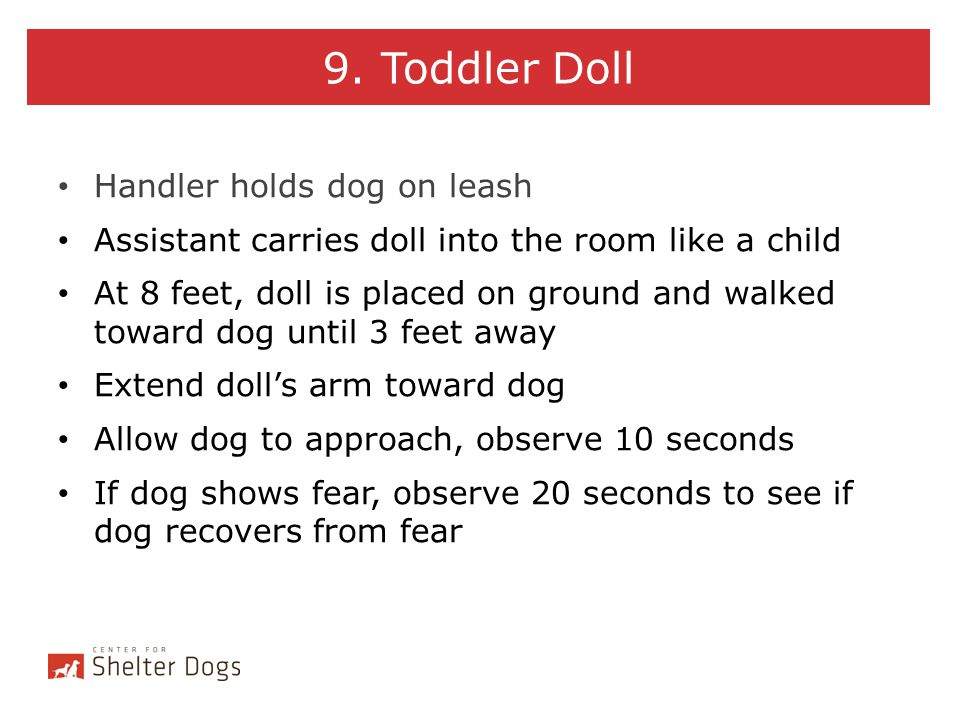 9. Toddler Doll Handler holds dog on leash