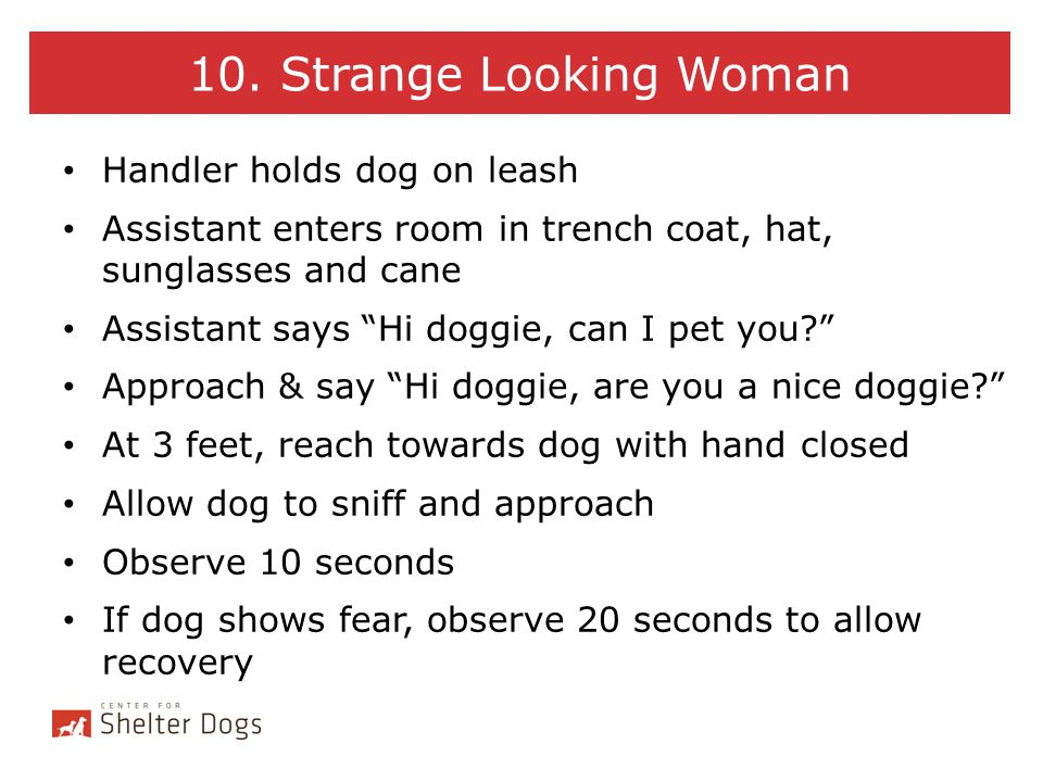 10. Strange Looking Woman Handler holds dog on leash