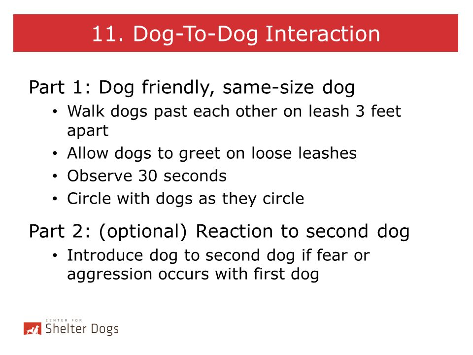 11. Dog-To-Dog Interaction