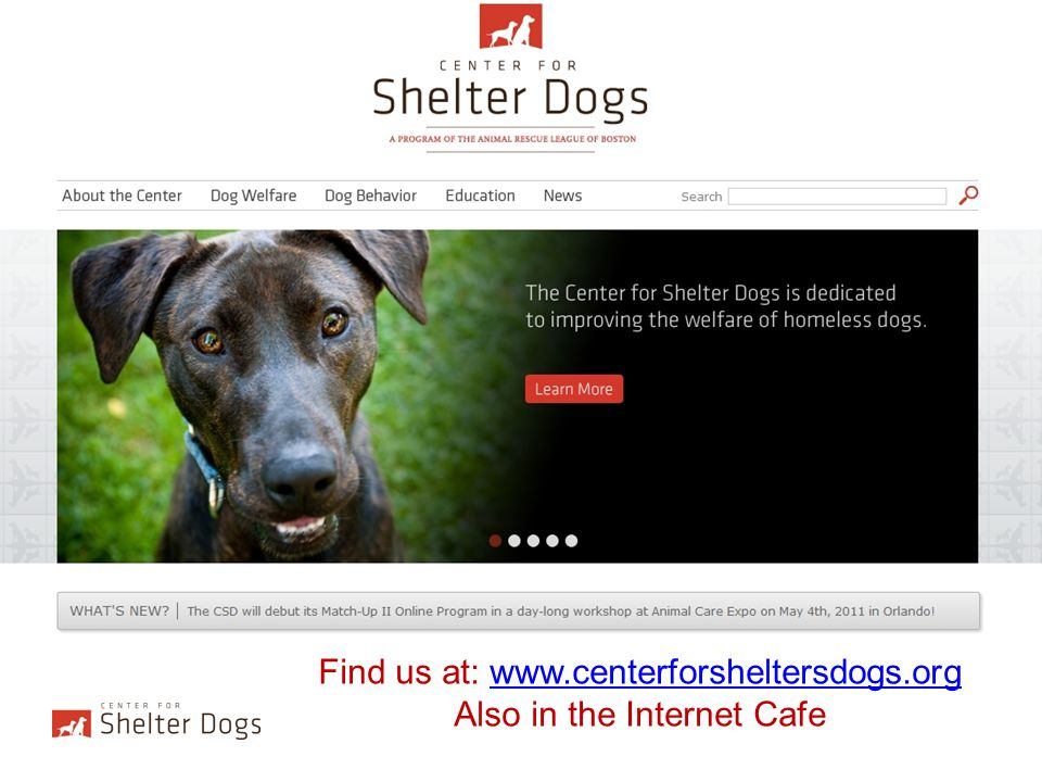 Find us at: www.centerforsheltersdogs.org Also in the Internet Cafe