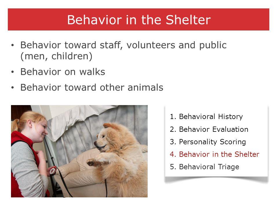 Behavior in the Shelter