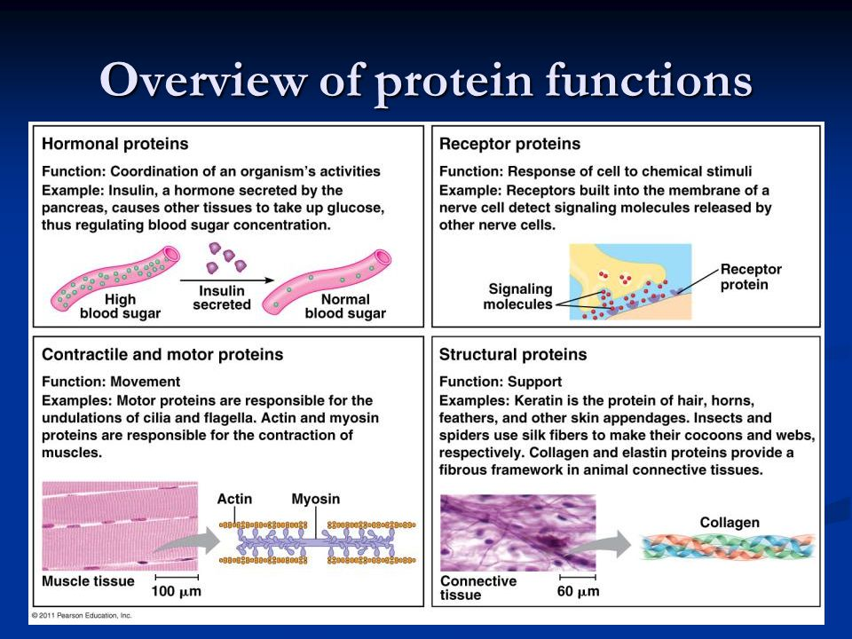 Overview of protein functions