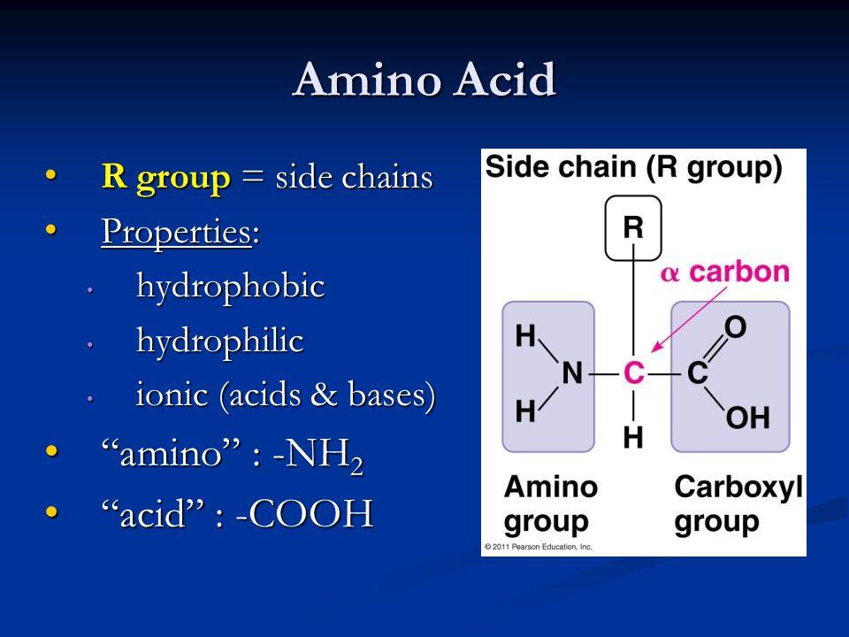 Amino Acid amino : -NH2 acid : -COOH R group = side chains